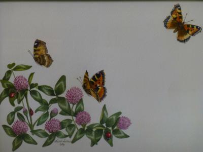 Butterflies and Ladybirds