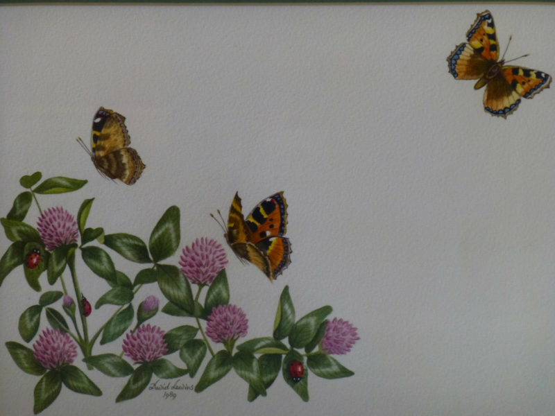 Butterflies and Ladybirds
