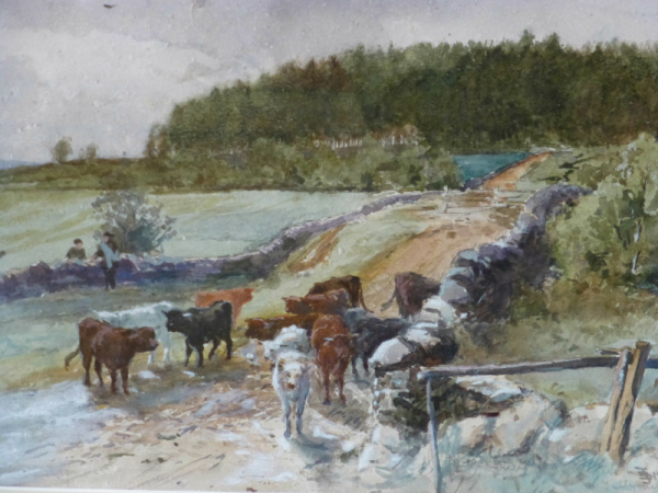 Cattle in Lowland Drove