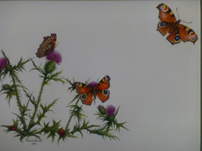 Thistle and Butterflies