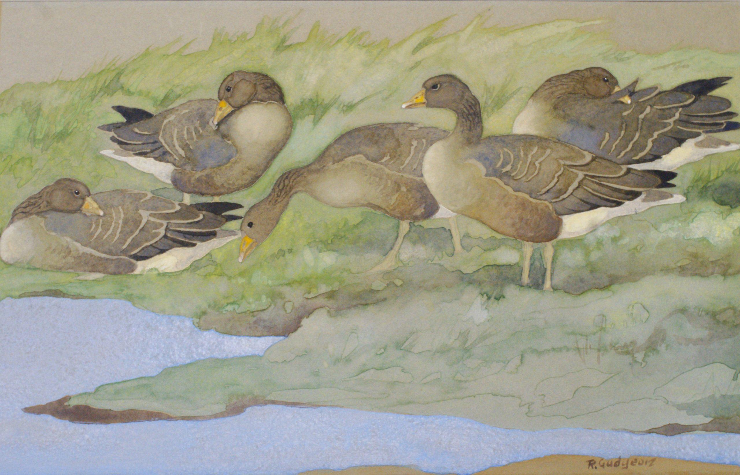 Ralston Gudgeon - grey lags