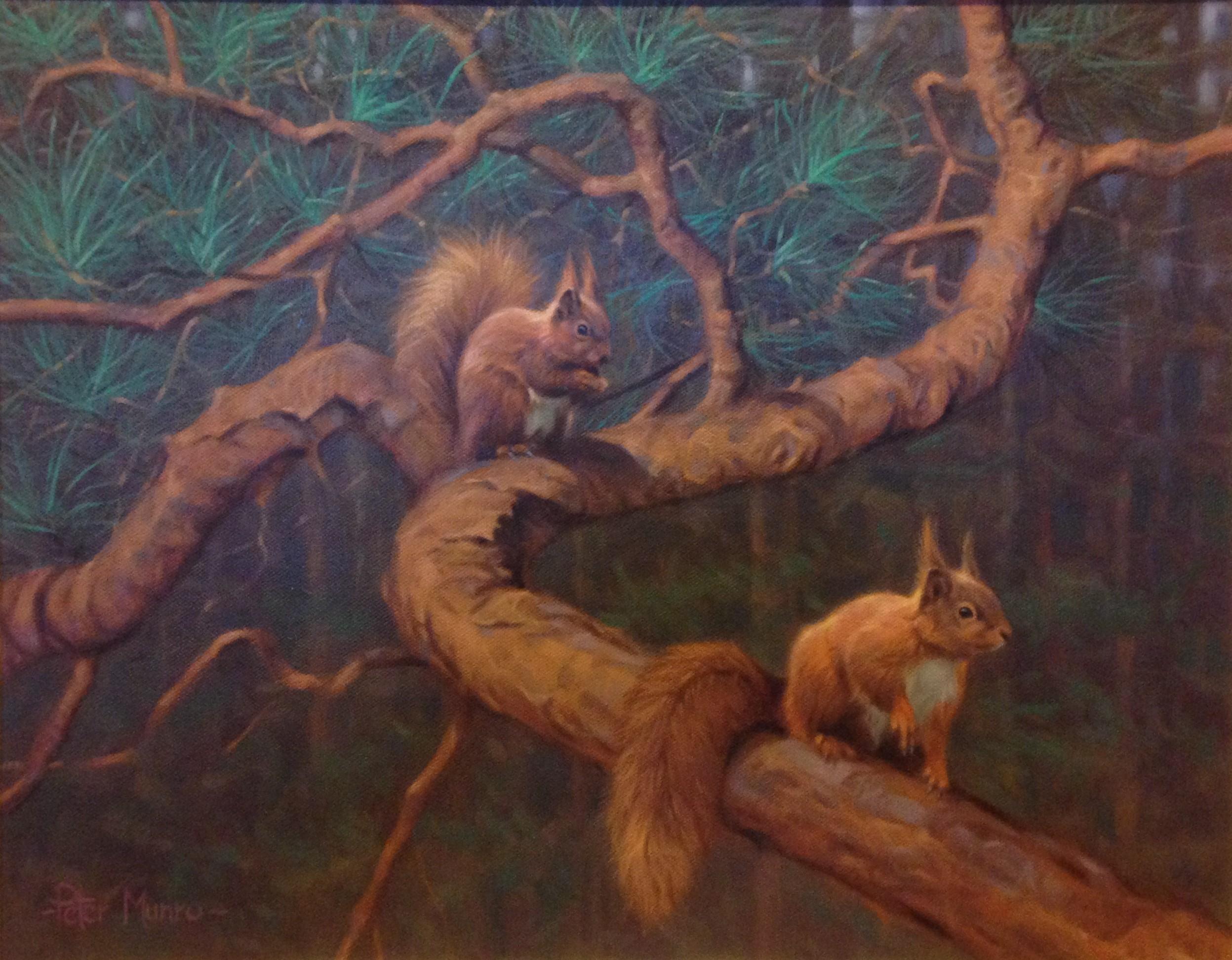 Peter Munro - Squirrels