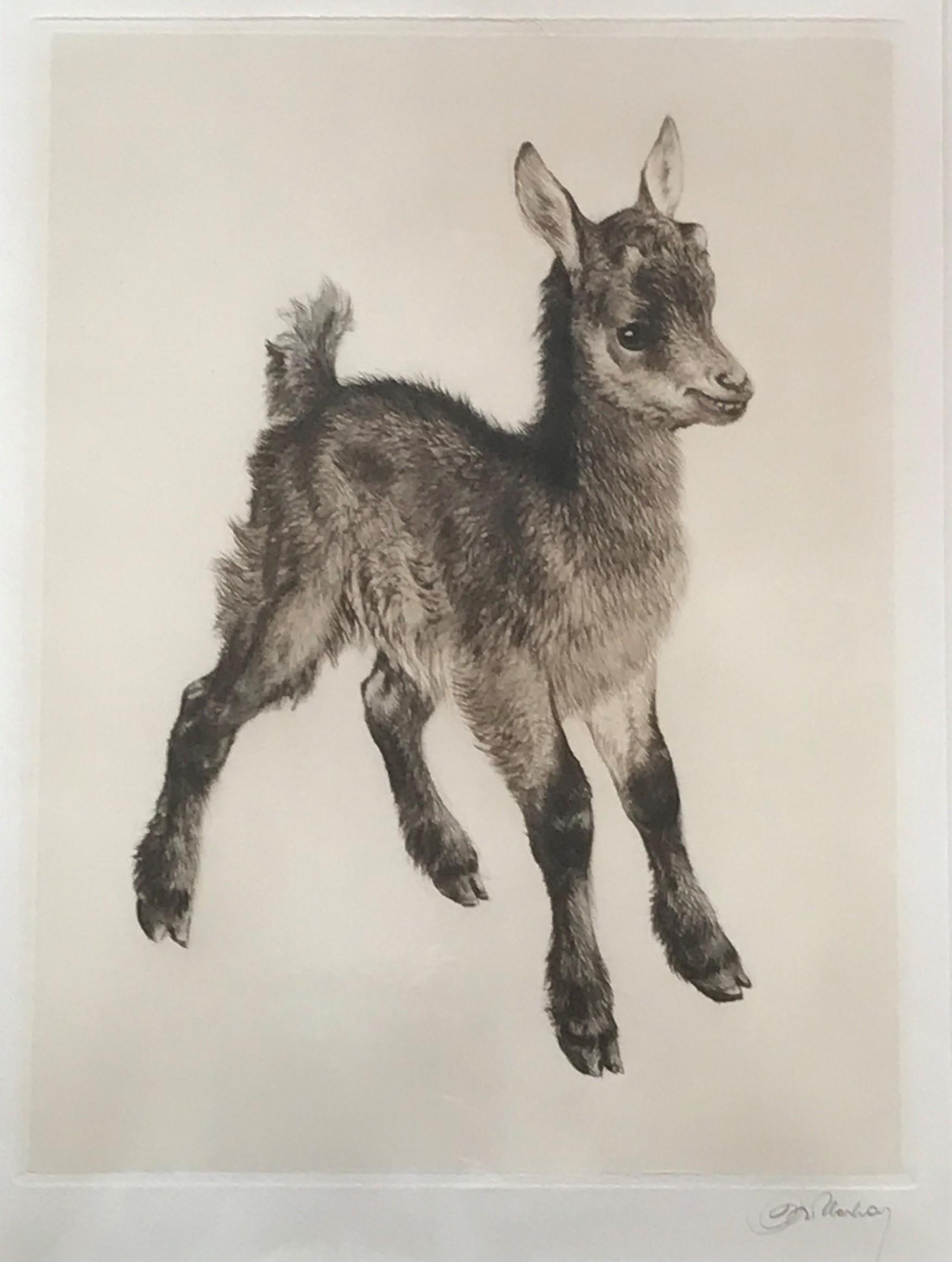 Kurt Meyer Eberhardt goat