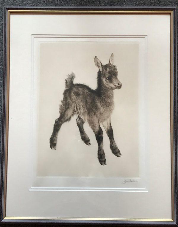 Kurt Myer Eberhardt goat
