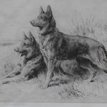 Herbert Dicksee German Shepherd