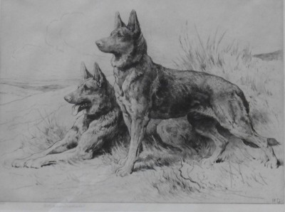 Herbert Dicksee German Shepherd