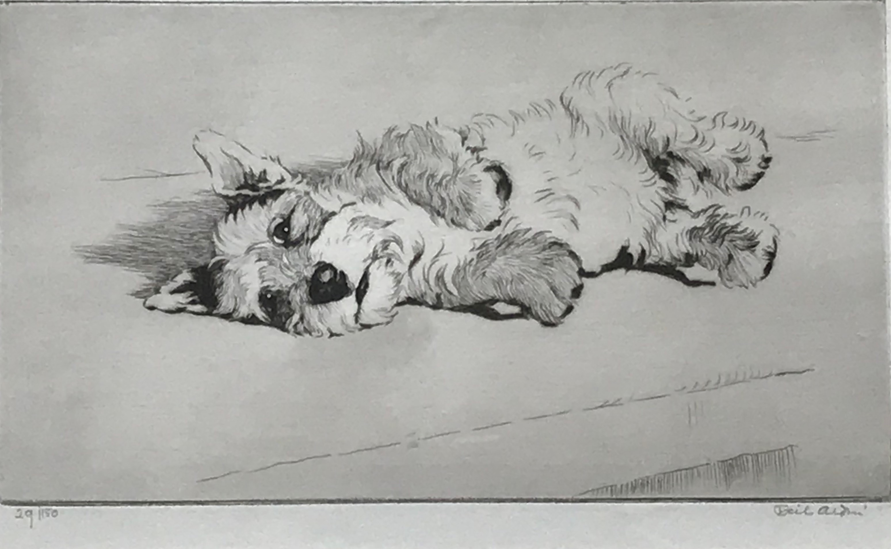 Cecil Aldin west highland terrier