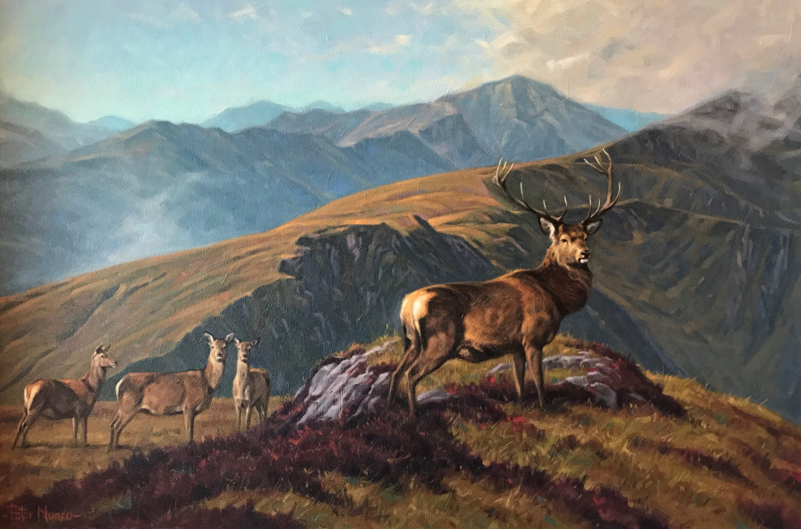 peter munro stags