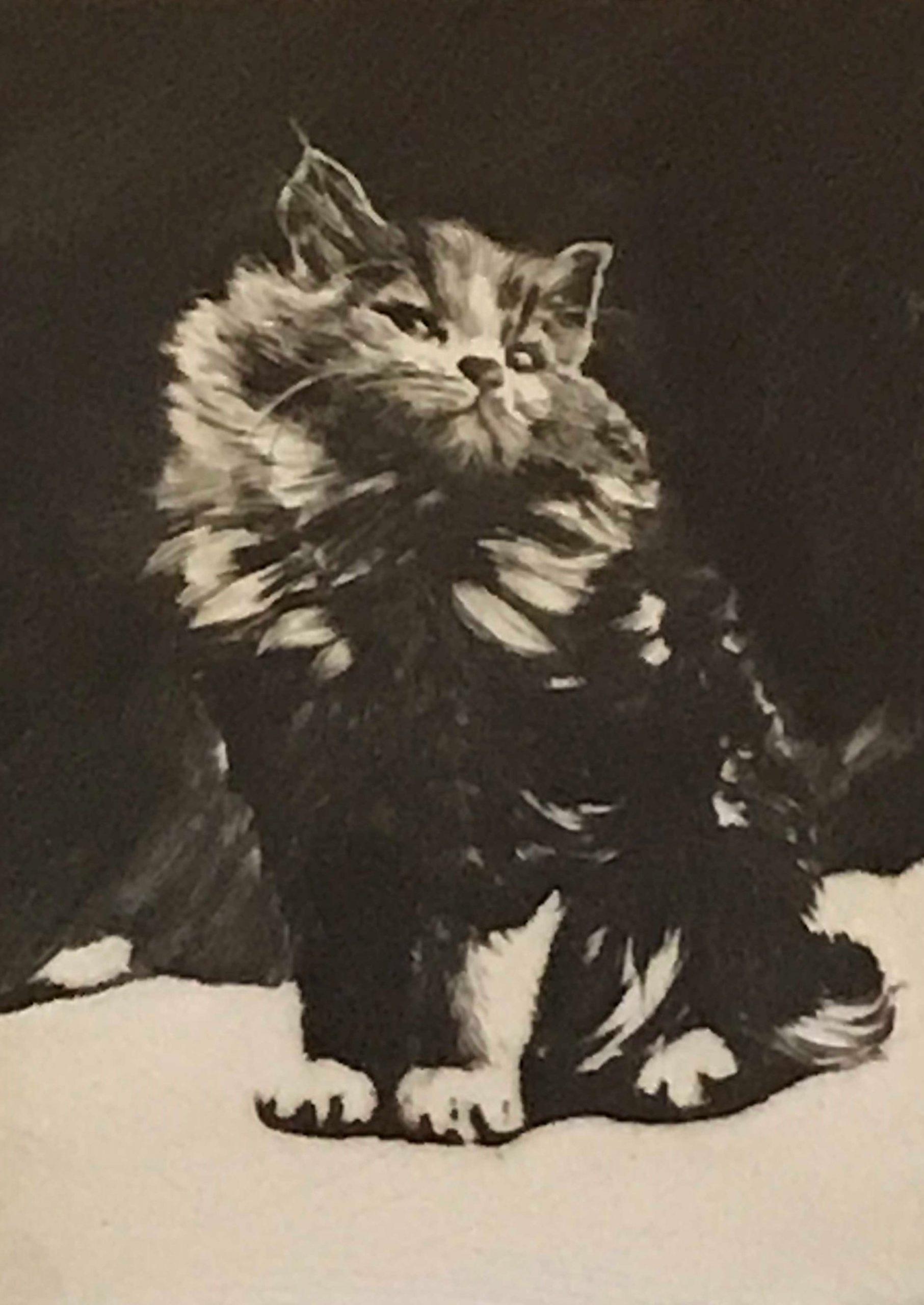 Tom Graham - Persian Cat