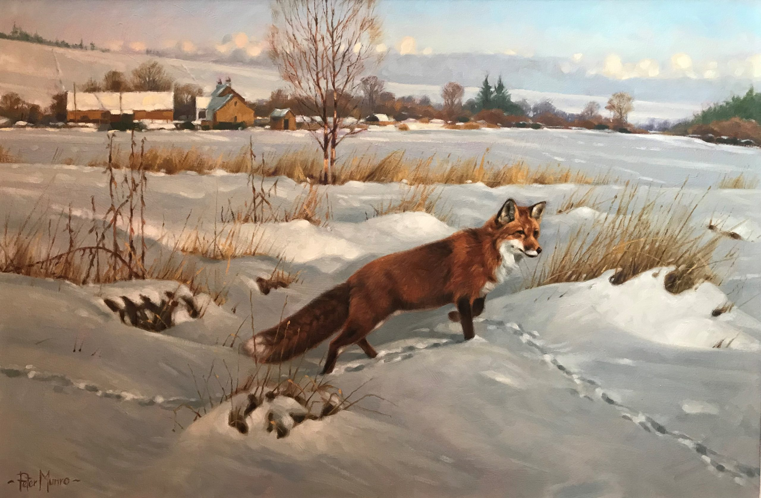 Peter Munro -fox in winter (6)