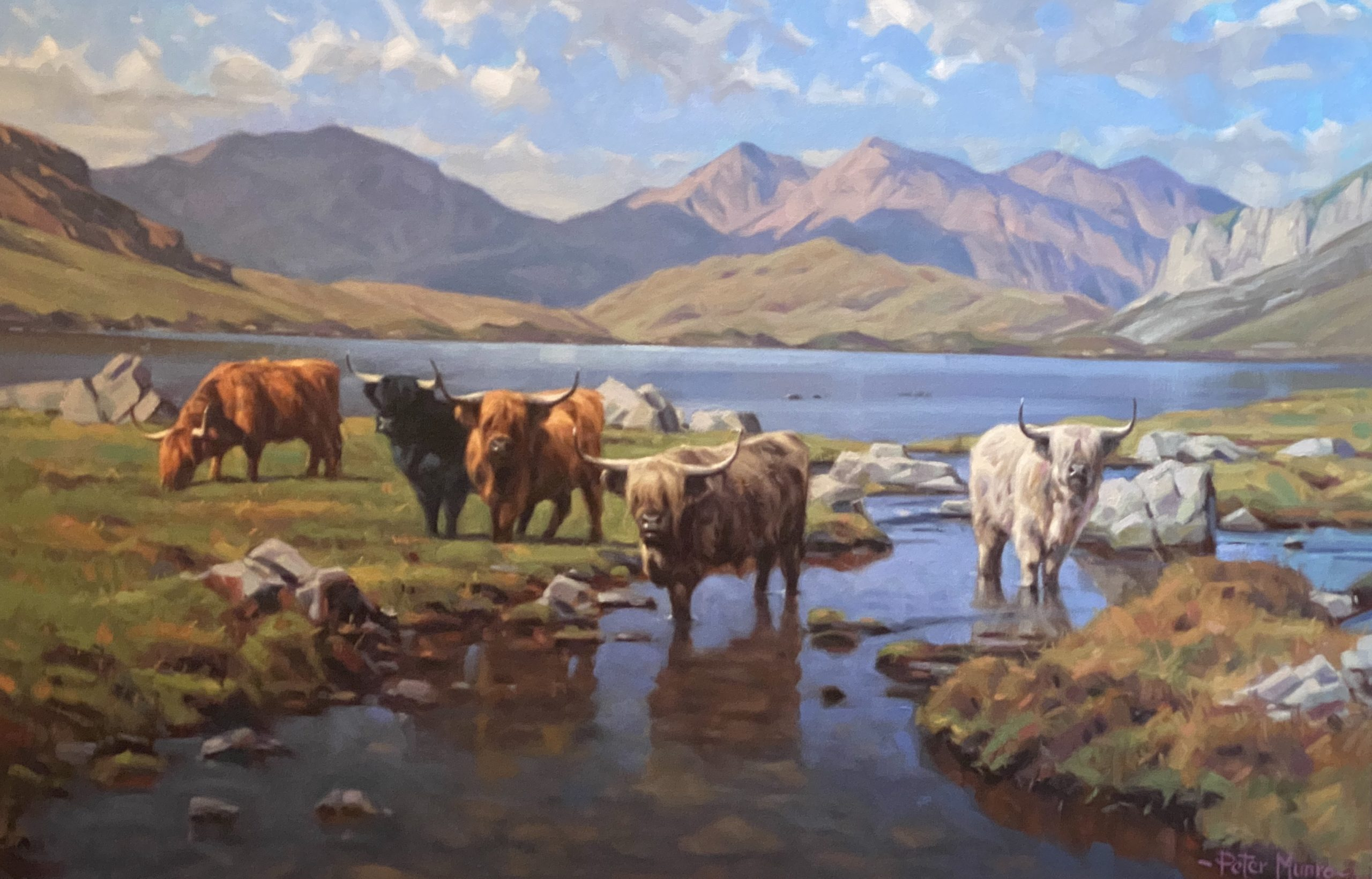 peter munro Highland Cattle (1)